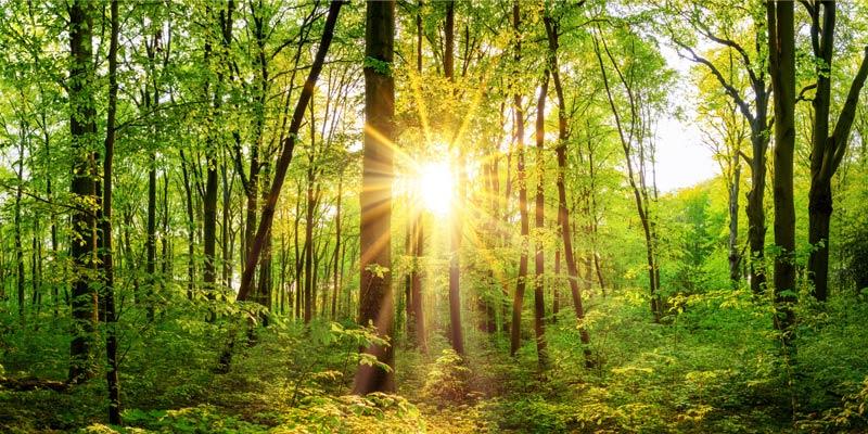Bildmitiv Wald - Natur & Bewegung